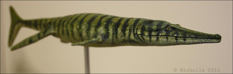 Scale model of <i>Metriorhynchus geoffroyii</i> (50cm long)
