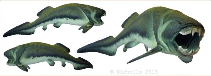 Scale model of <i>Dunkleosteus terrelli</i> (50cm long)