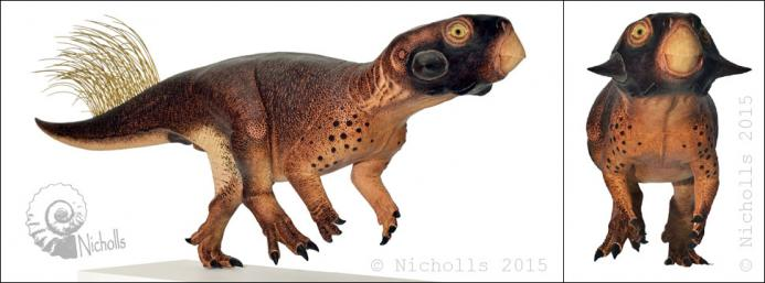 Life-size <i>Psittacosaurus</i> sp. with accurate colour patterns (118cm long)