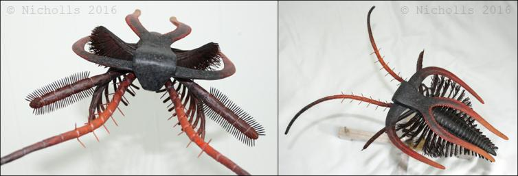Scale model of <i>Marrella splendens</i> (30cm long)
