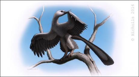 <i>Archaeopteryx lithographica</i>